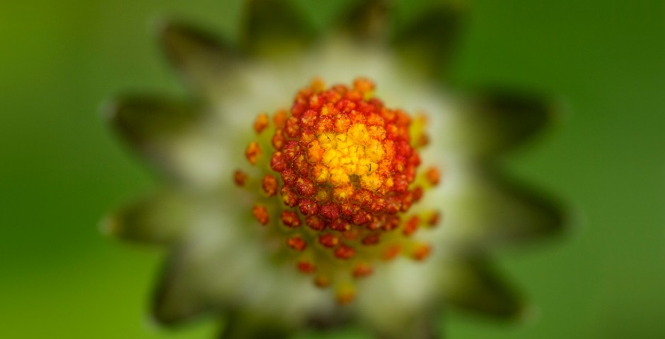 Flower Macro by Maria Llorens