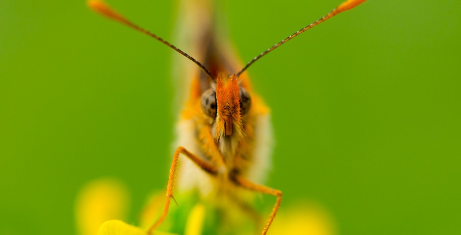 Butterfly Macro by Maria Llorens