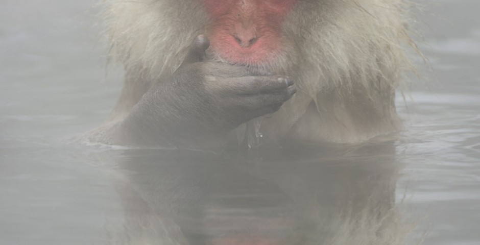 Jigokudani snow monkey park Japan by Maria Llorens